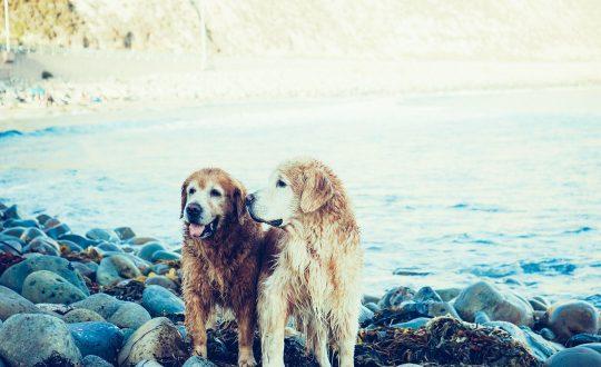 Met een hond