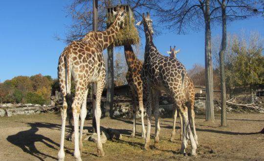 Ga een dagje naar de dierentuin!