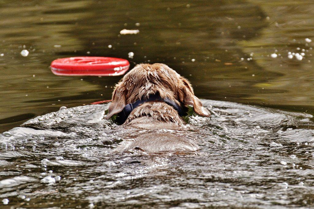 Met je hond naar het Gardameer