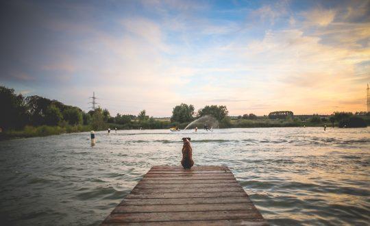 Neem je hond mee naar het Gardameer