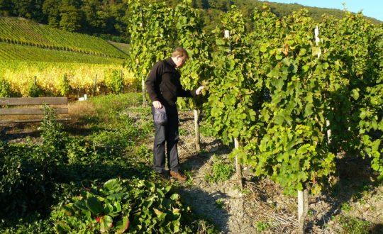 3 prachtige wijnroutes aan het Gardameer