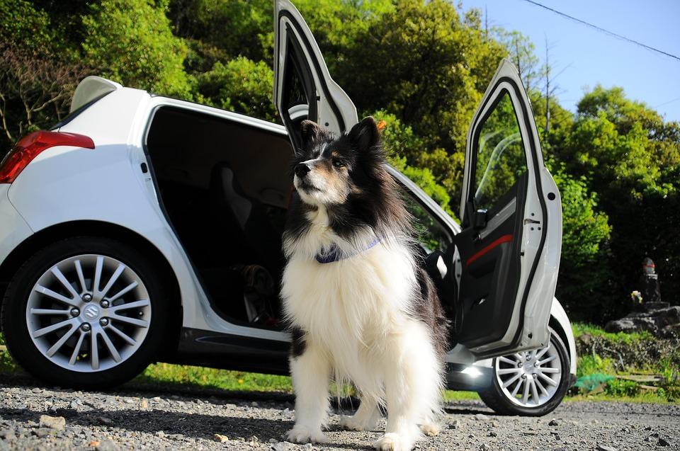 hond auto tips voor de Italiaanse wegen