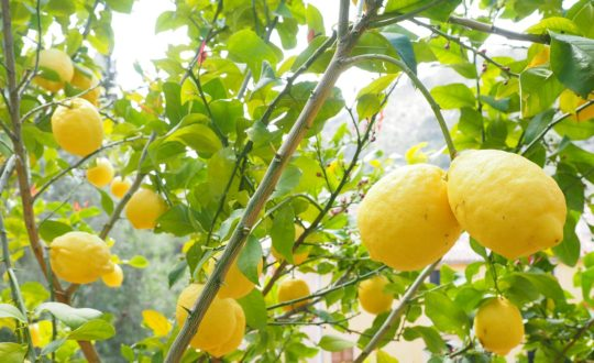 To do tip: Limoncello proeven aan het Gardameer