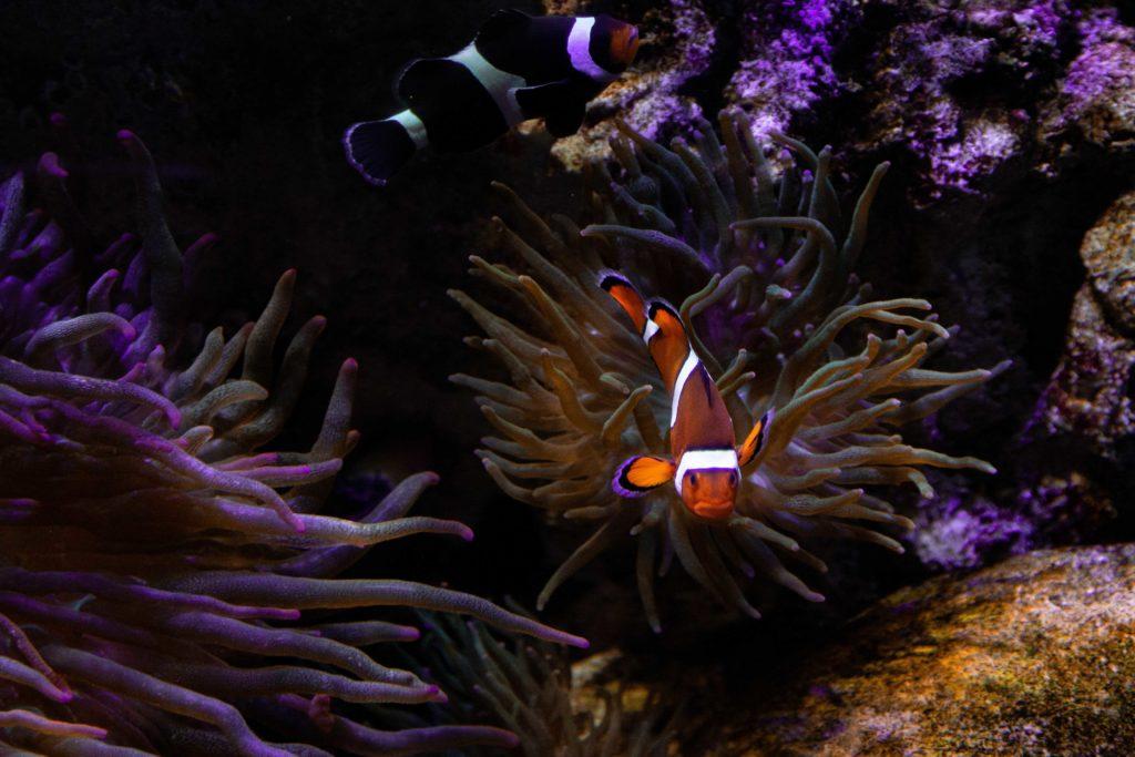 Bezoek aan Sea Life